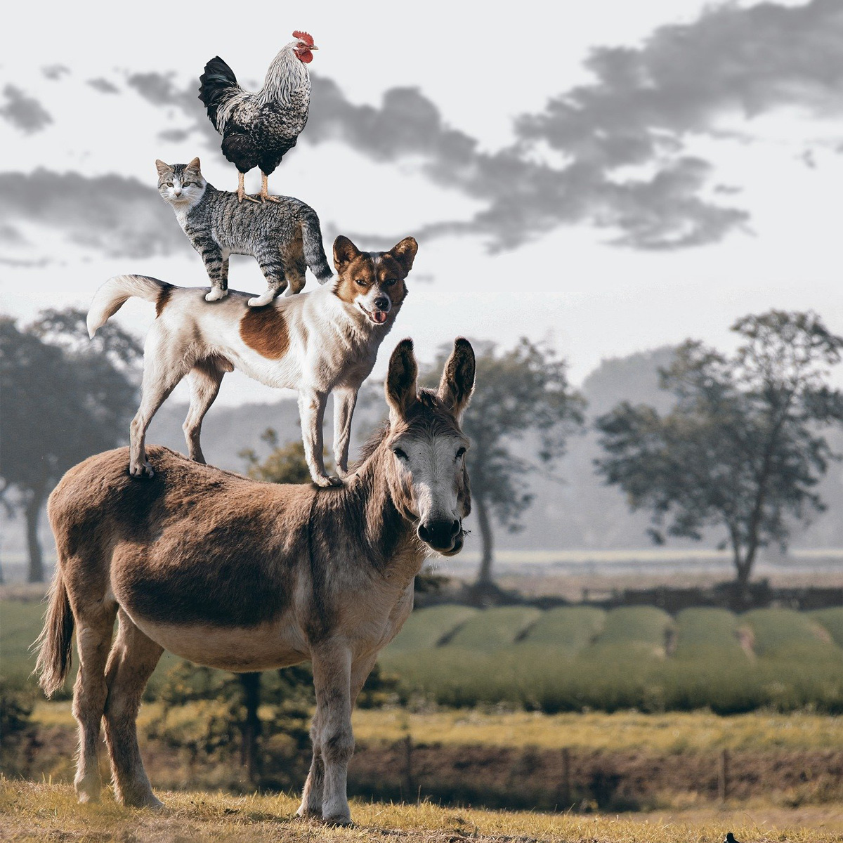 Tag mit Esel - ausgebucht